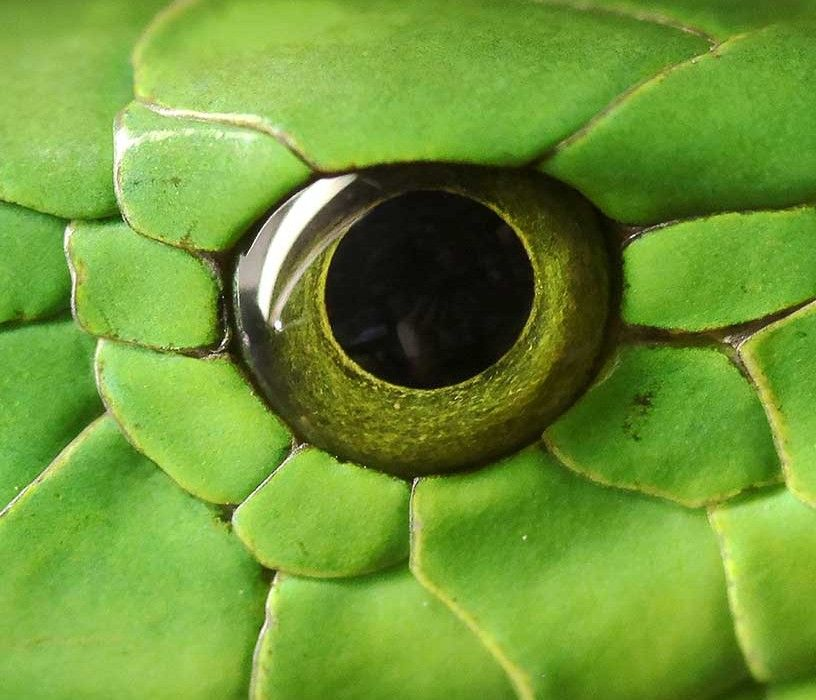 Die Welt mit den Augen der Tiere sehen  Tieraugen  Augen
