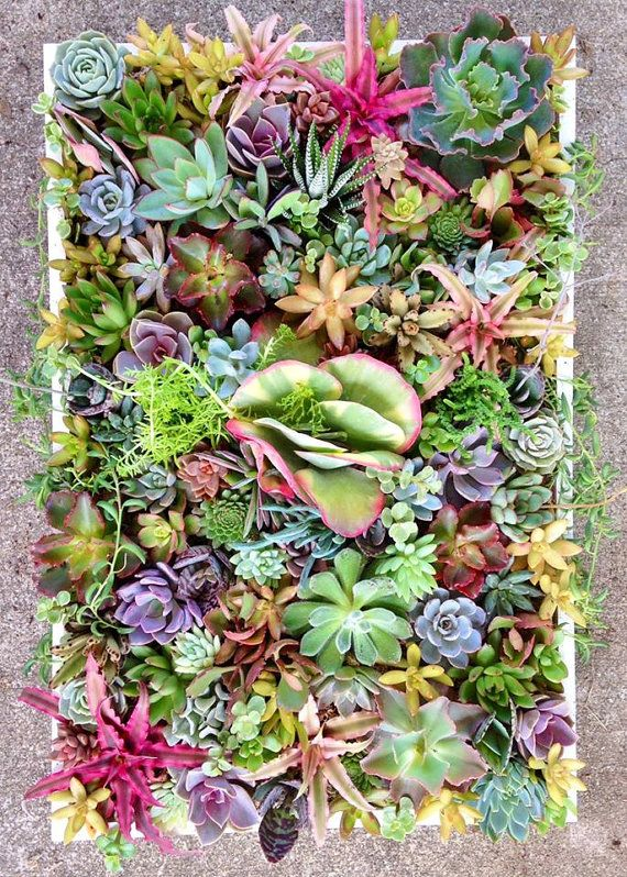 LOVE This Living Succulent Wall Display
