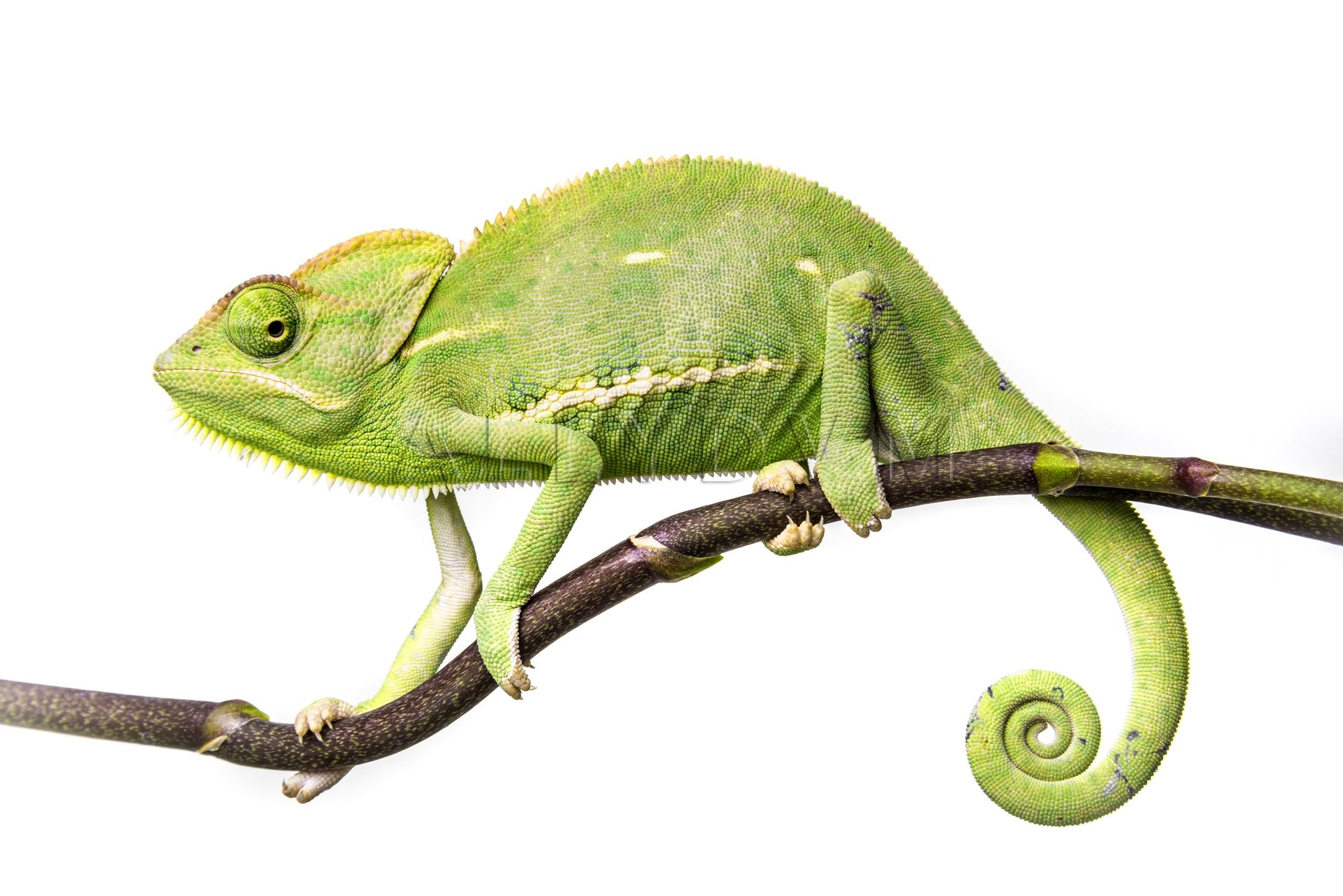 Pin on Small & Exotic Animals