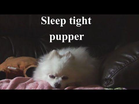 Cute Dog Sings Con Te Partiro Cute Cute Dogs Funny Dogs