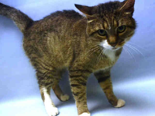 NINO - A1085045 - - Manhattan  ***TO BE DESTROYED 10/31/16***  SECOND CHANCE!! Please Share:-  Click for info & Current Status: http://nyccats.urgentpodr.org/nino-a1085045/
