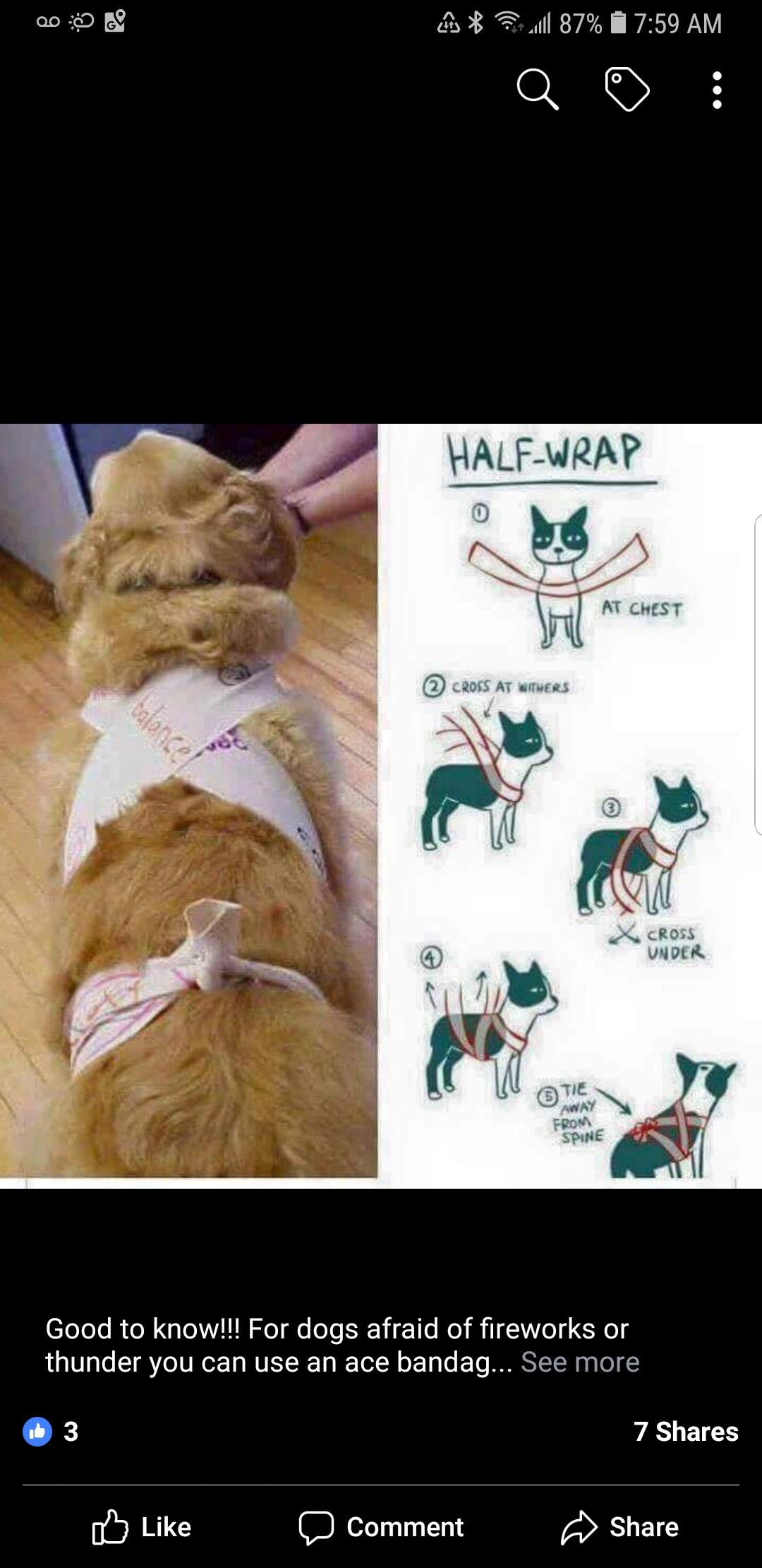 Pin by angela hellenbrand on pets Dog shirt diy, Dogs