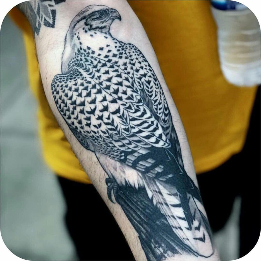 Pin by nikos eleftherakos on falcons nature tattoo