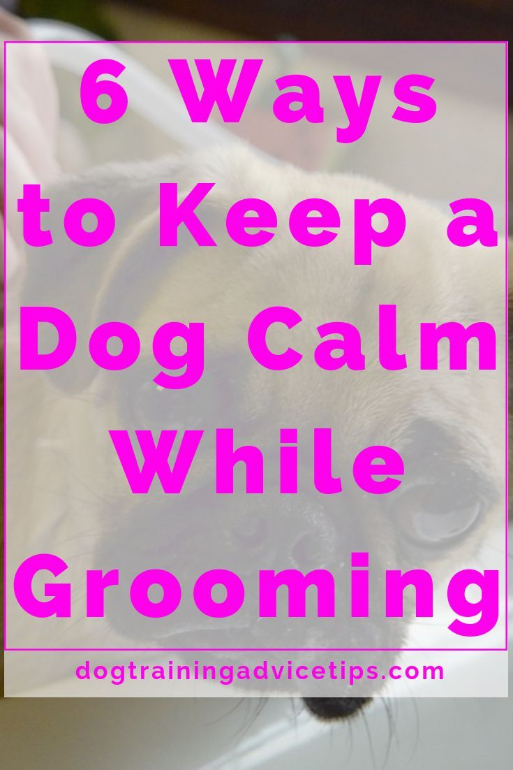 6 ways to keep a dog calm while grooming dog training