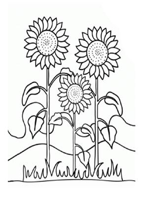 Ausmalbild Sonnenblumen Sonnenblumen Blumen Ausmalbilder Ausmalen
