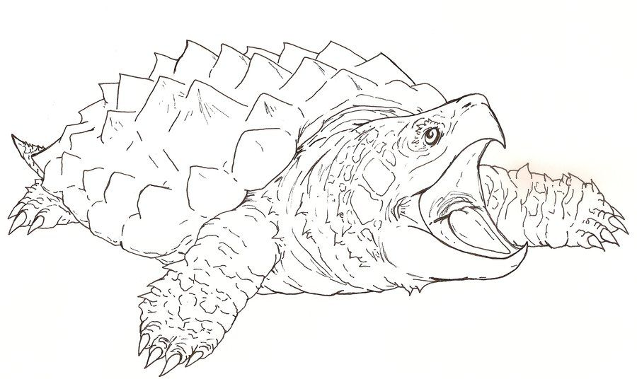 Snapping Dragon Turtle Outline By Fachhillis On Deviantart With