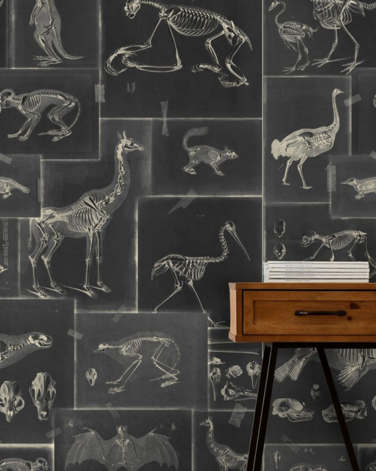 Zooarchaeology Anthracite Wallpaper by Mind The Gap in
