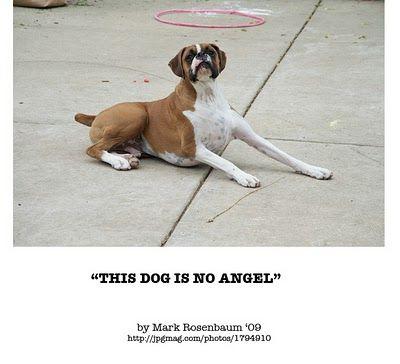 "Angel Espionage: Mark Rosenbaum - ""This Dog is no Angel"" '09"