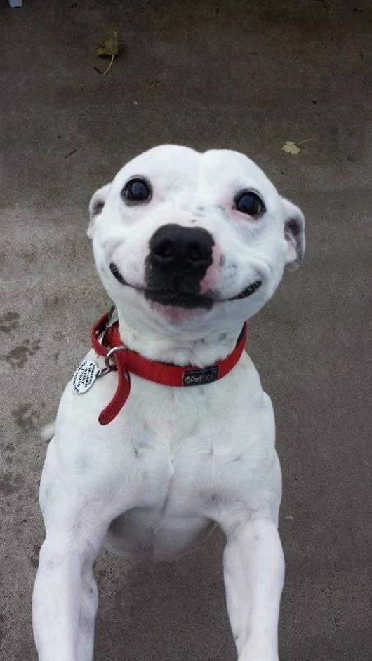 15 Animals Filled With Happiness To Brighten Your Day
