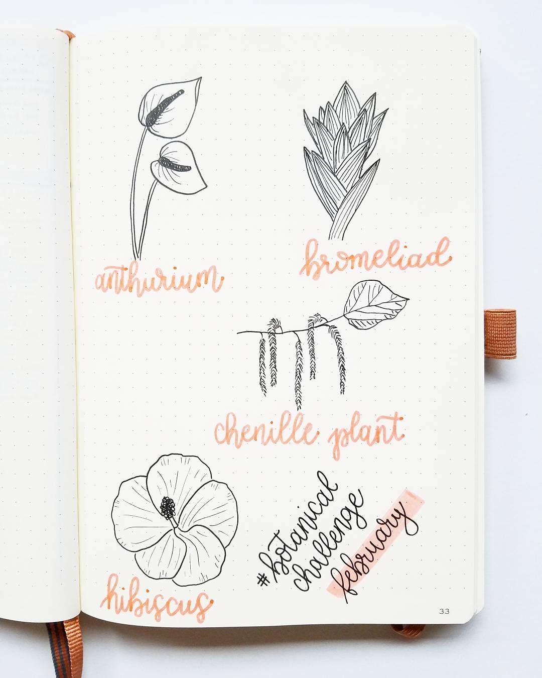 Bullet Journal Drawing Ideas Botanical Drawings Flower Drawings Bromeliad Drawing Anthurium Drawi Bullet Journal Art Flower Drawing Planner Bullet Journal