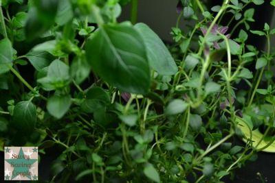 Aerogarden Extra Elite Indoor Gardening System Update 400 x 300