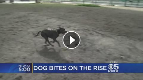 Dog Bites Up Across The Board In California: Dog bites are a growing problem in California. Len Ramirez reports. (10/31/16)