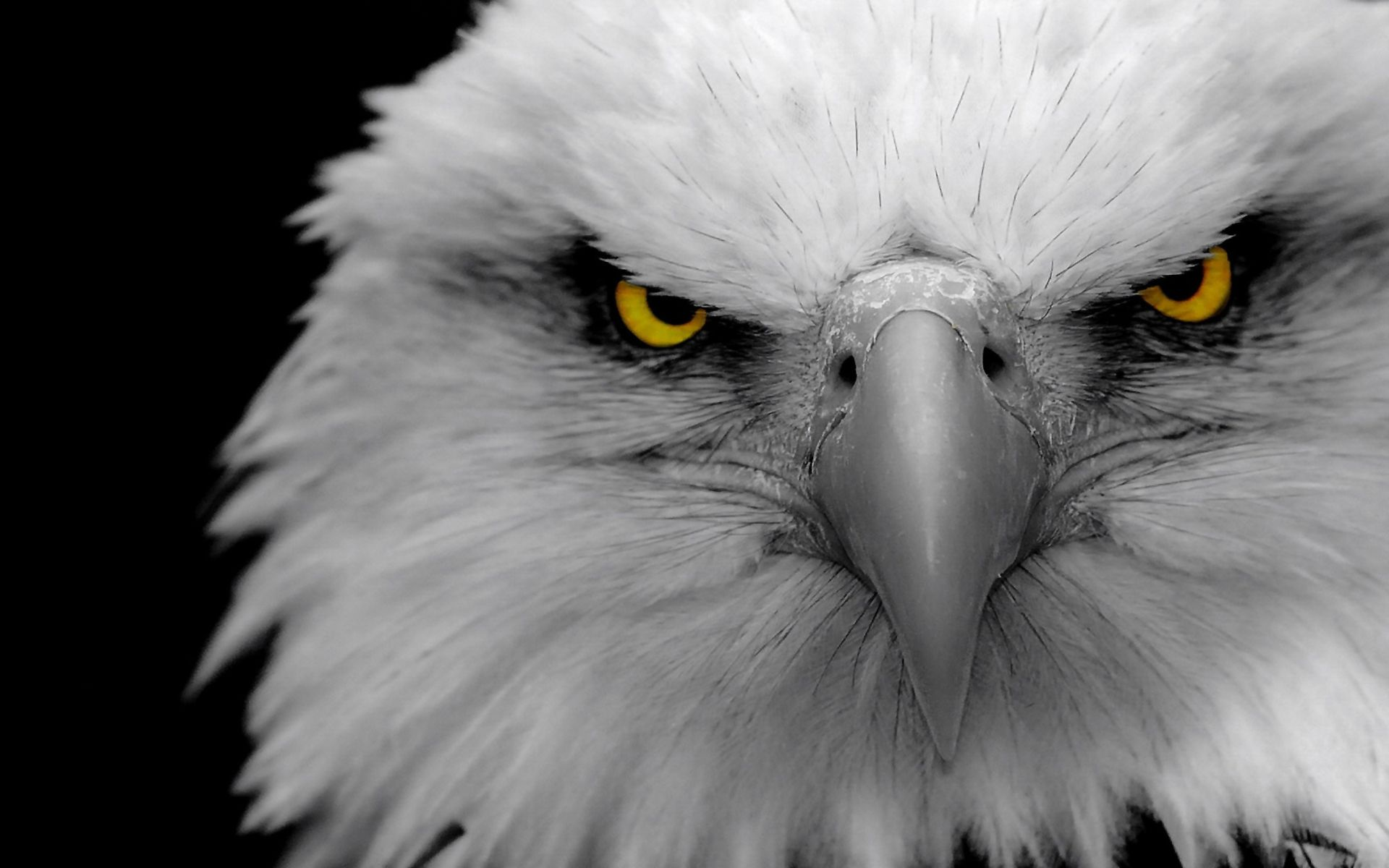 Eyes Eagle Eyes Wallpapers Pictures Photos Images Eyes