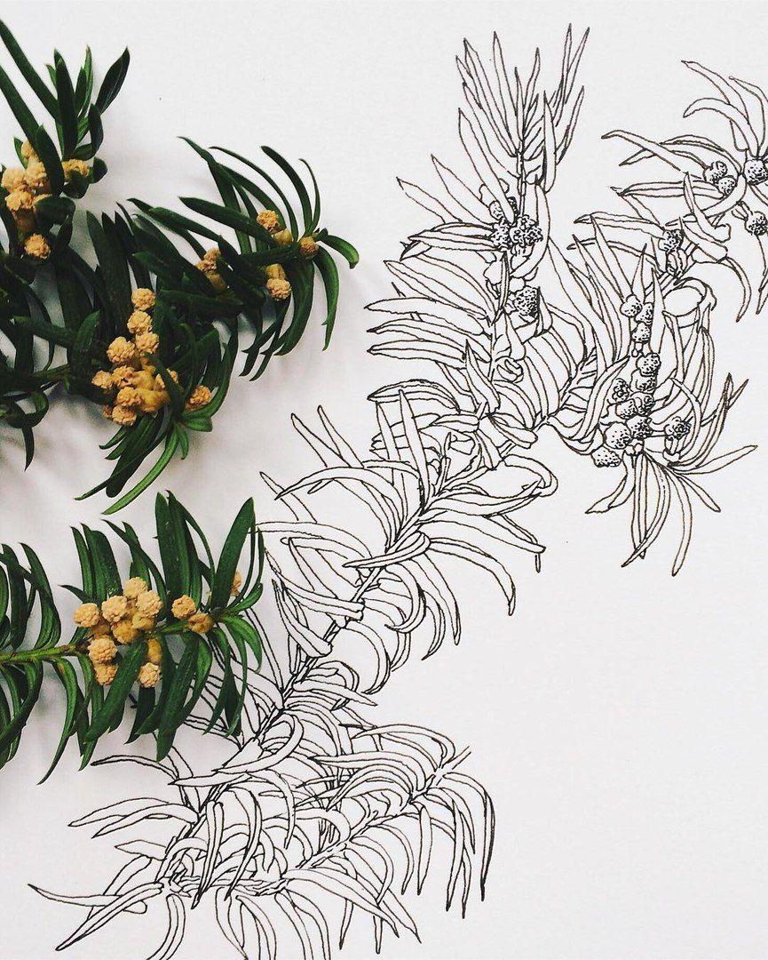 Printupatternuillustrations ink plants pinterest