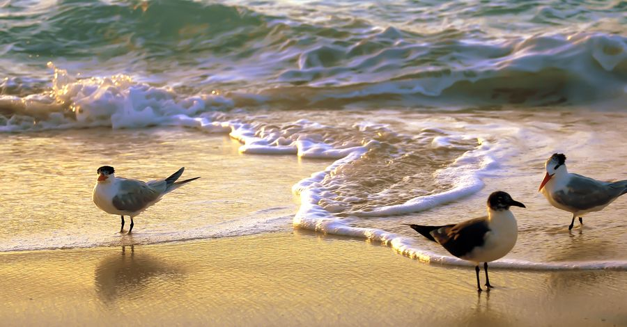 Park Art|My WordPress Blog_Deep Sea Sand Art Uk