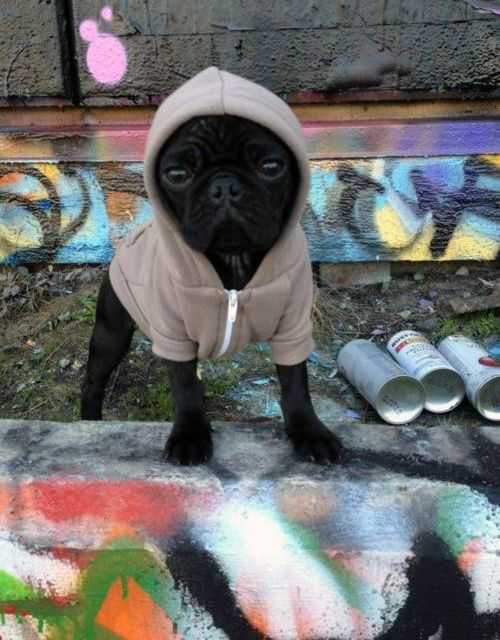 Americanapparel Graffiti Puppy Dogs Pug Preto Cachorrinhos