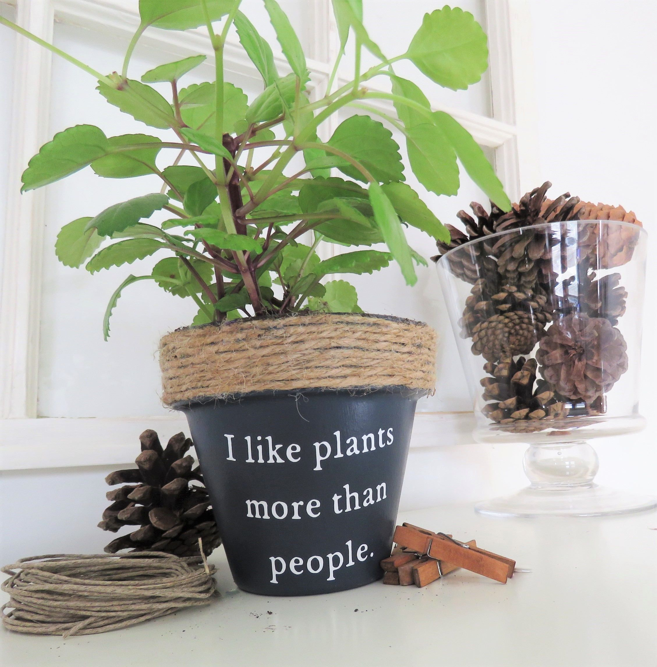 I Like Plants More Than People Funny Plant Pot Funny Plant Pun Potter Succulent Planter Indoor Planter Funny