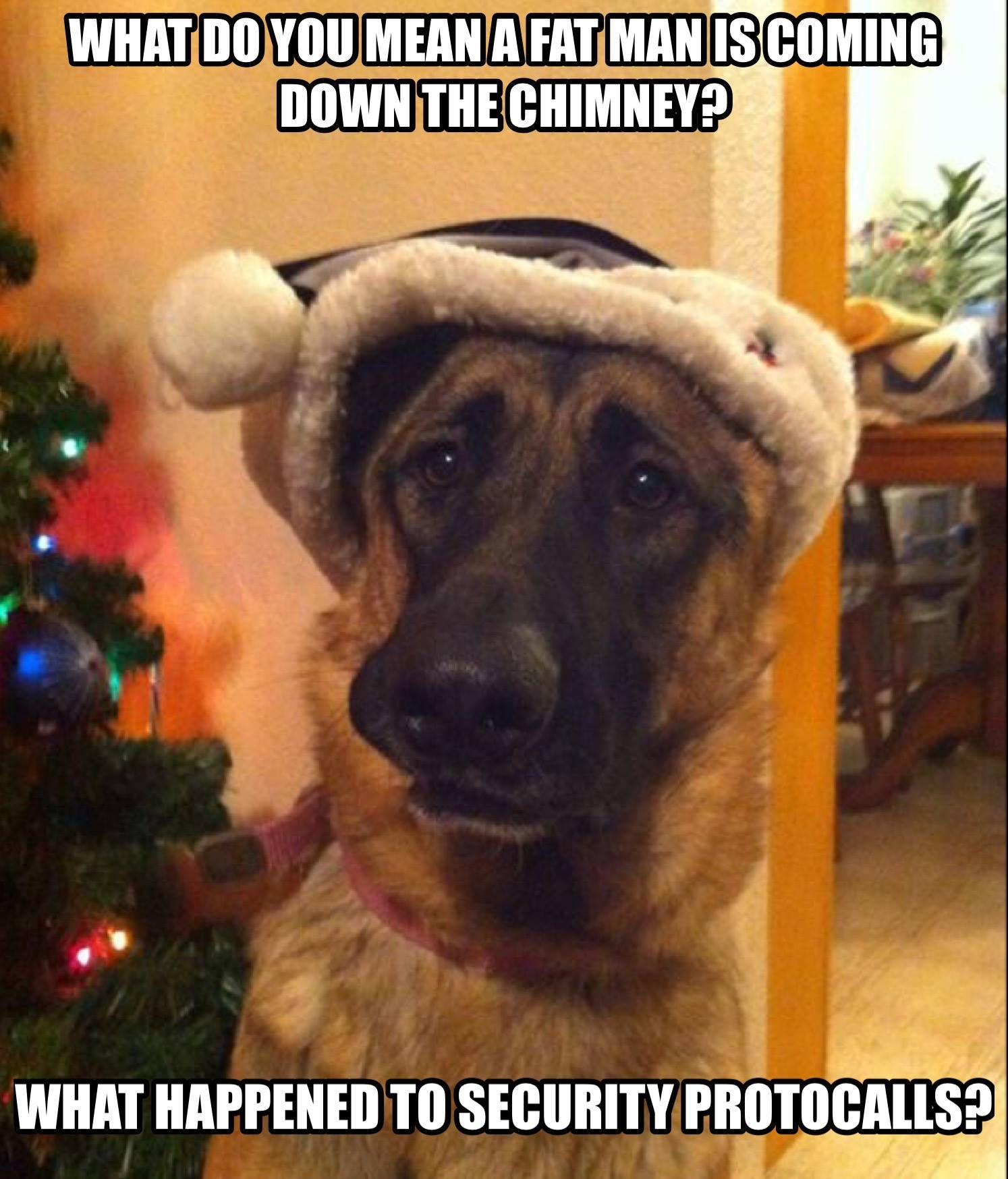 What Happened To Security Protocalls German Shepherd Funny