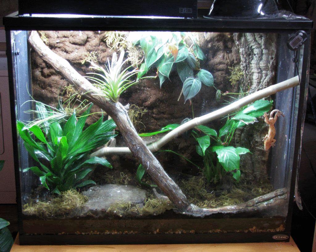 Crested Gecko Habitat Crested Gecko Pinterest