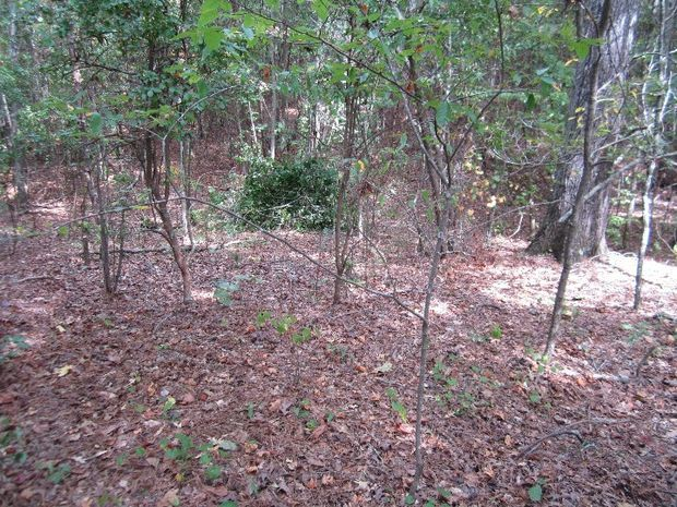 building a natural ground blind ground blinds crossbow