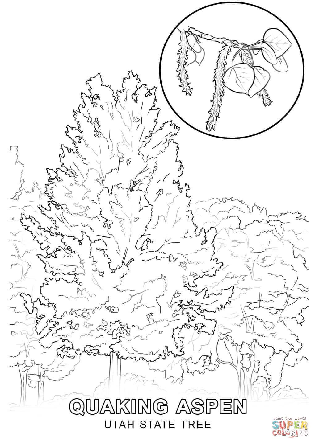 Click The Utah State Tree Coloring Pages To View Printable Version Or Color It Online Compatible Wit Tree Coloring Page Coloring Pages Abstract Coloring Pages
