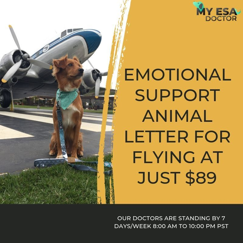 Get An Emotional Support Animal Letter (With images
