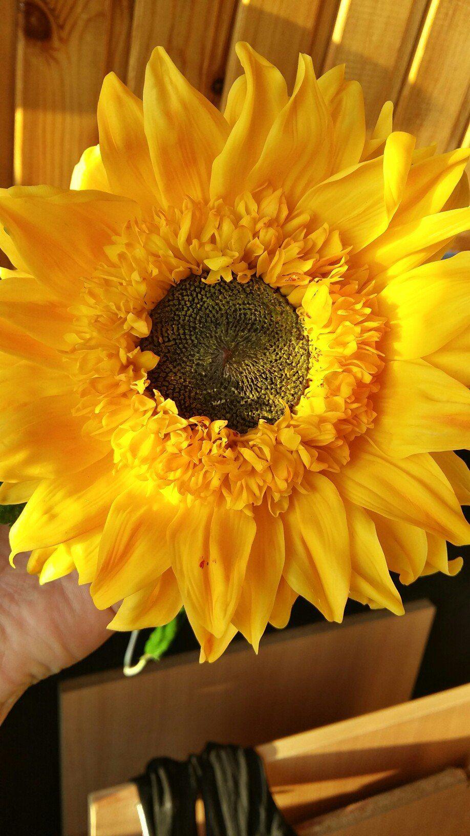 Natali Flowers | VK | Flowers, Gum paste flowers, Gum paste