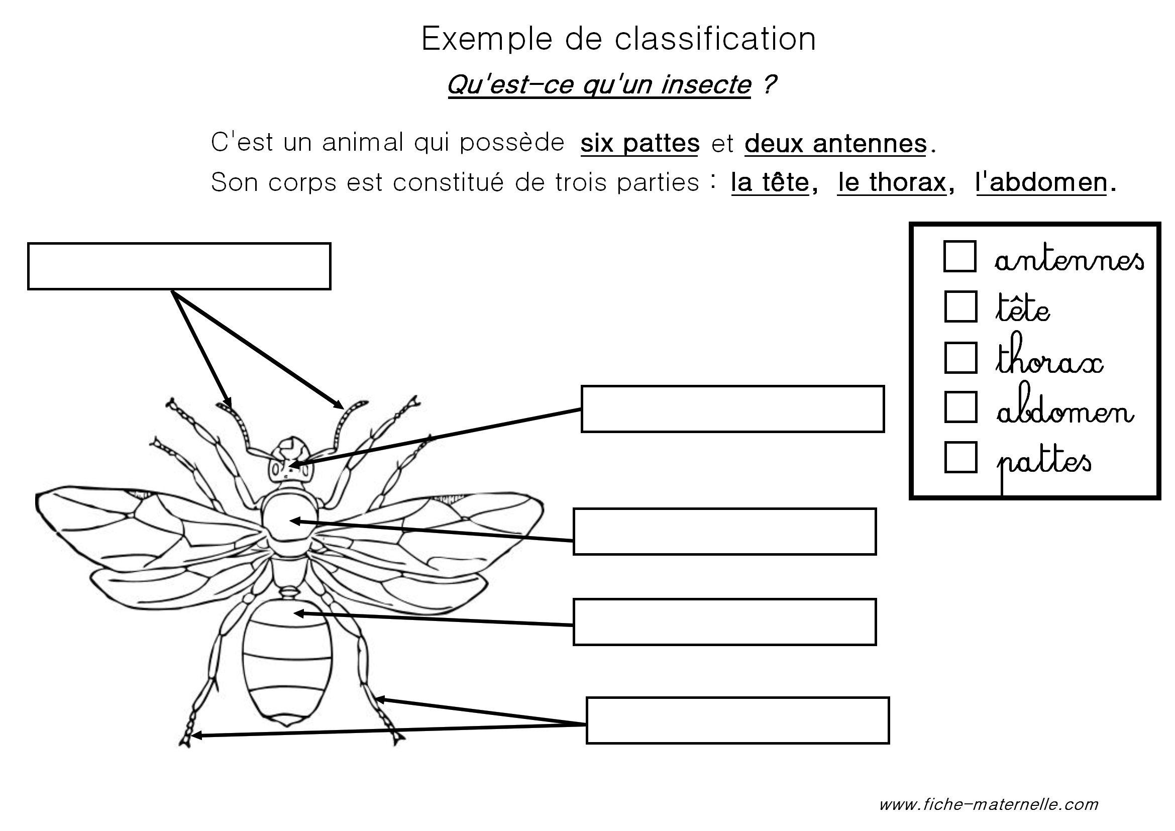 Classification des animaux en maternelle et cp french - Reconnaitre les insectes xylophages ...