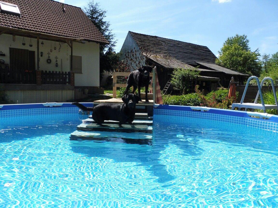Swimming Pool Diy Pool Dog Dog Ramp Dog Stairs Into