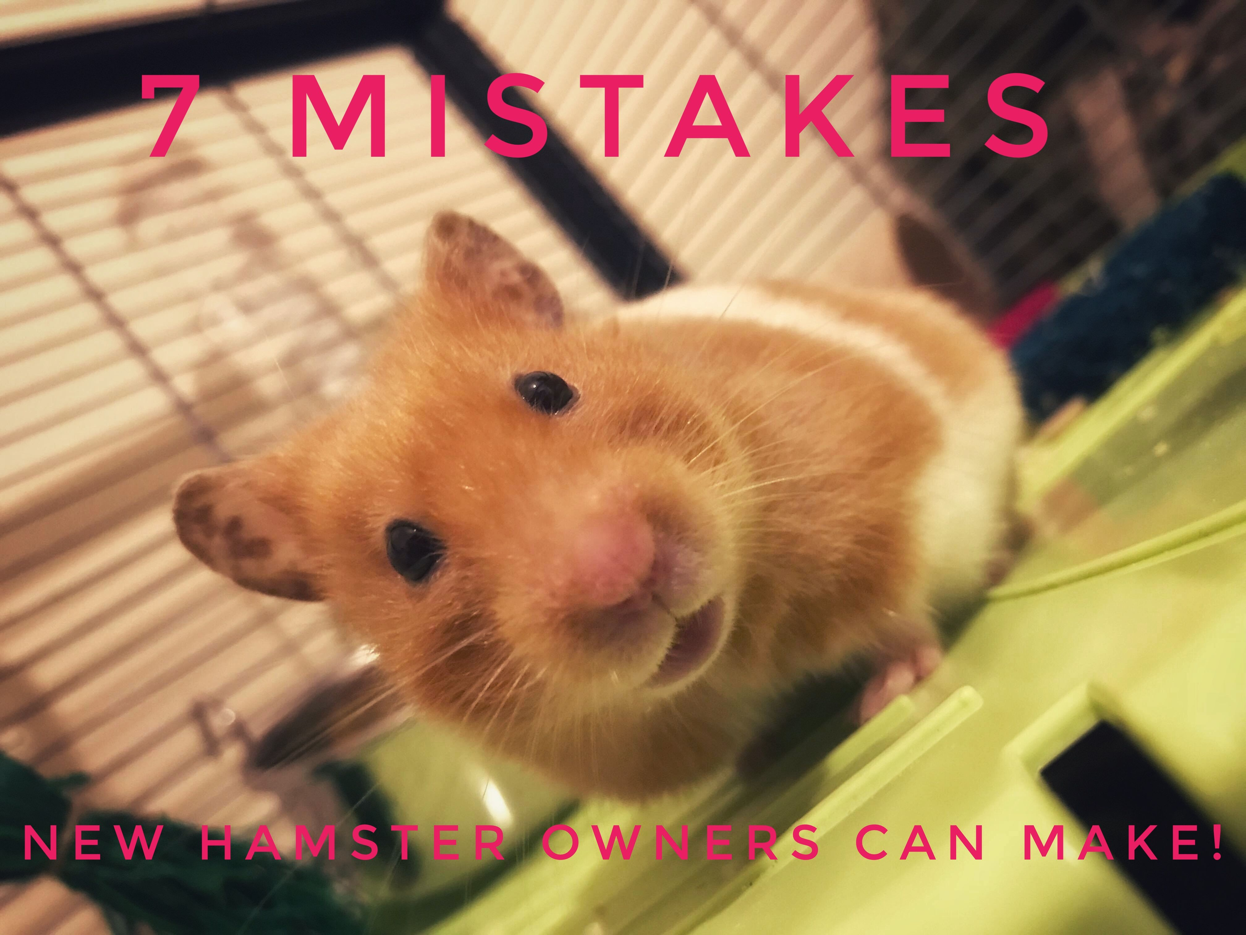 2526cf0b57d865623a6ac7769d477f17 - How To Get My Hamster To Stop Biting His Cage