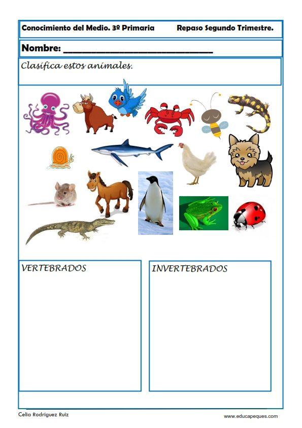 Actividad conocimiento del medio: Clasificar animales vertebrados y ...