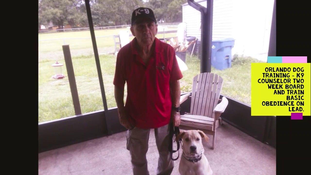Orlando Dog Training Services With Bob Gailey Dog Training Dogs