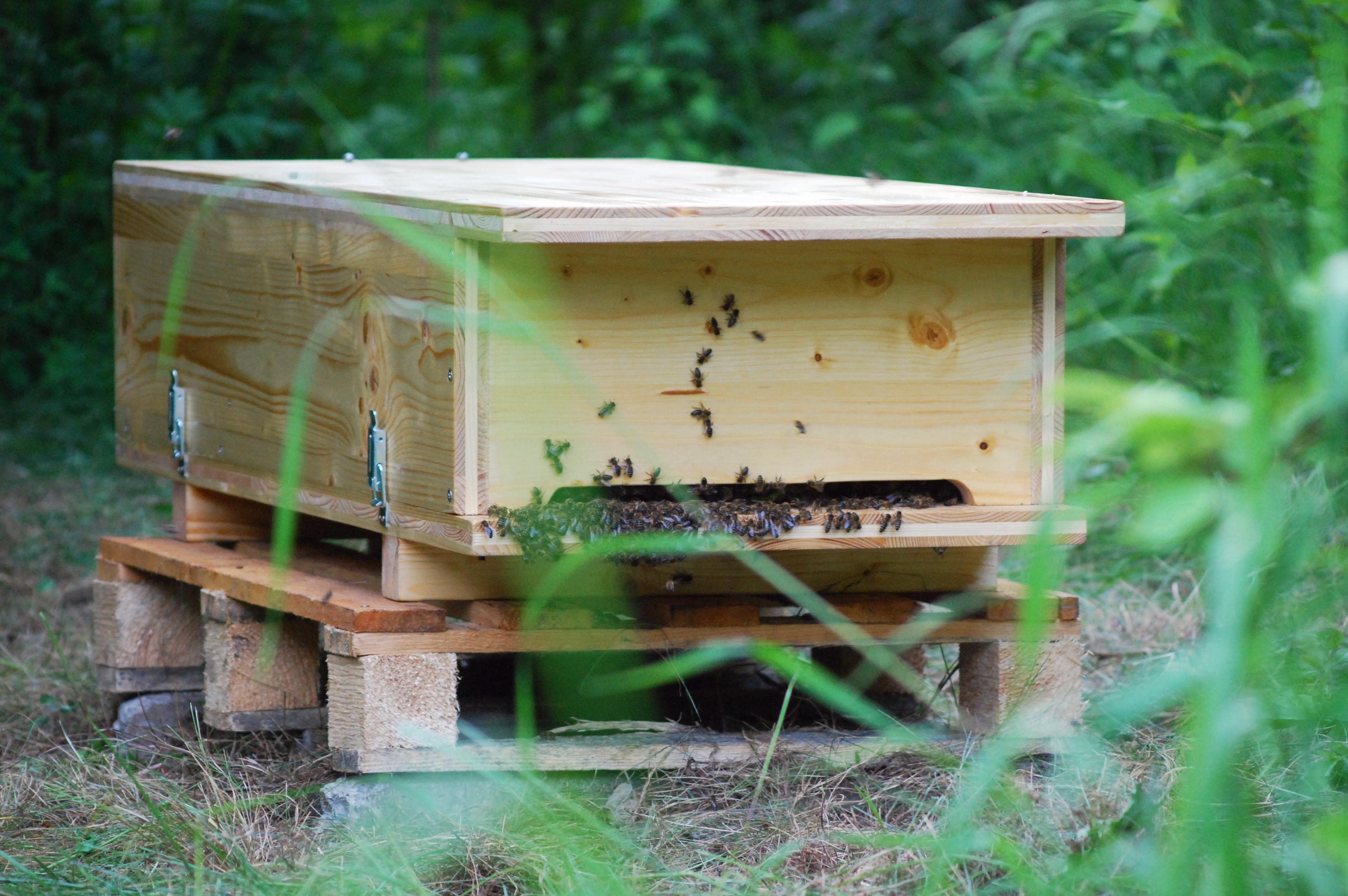 bienenkiste selber bauen heimat f r die wichtigsten tiere tierisch gut bienen bienenhaus. Black Bedroom Furniture Sets. Home Design Ideas