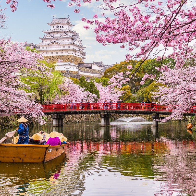 Cherry Blossom Season In Japan 10 Things To Know Travelawaits Cherry Blossom Japan Cherry Blossom Season Tokyo Cherry