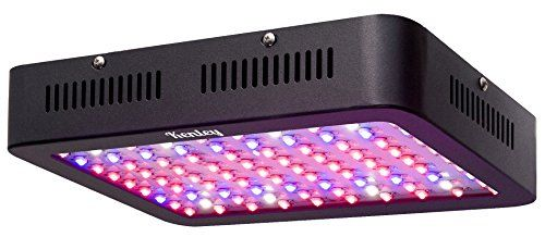 Cheap Kenley 300W Led Grow Light For Indoor Plants 400 x 300