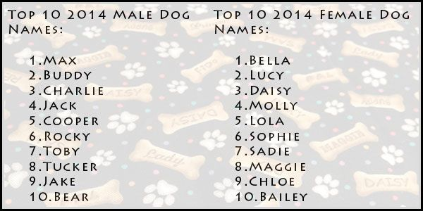 Pin By Pets Lover On Unique Dog Names Female Dog Names Dog Names Dog Top