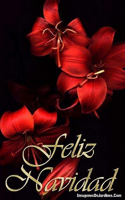 Imagenes de flores rojas feliz navidad diciembre - Feliz navidad frases ...