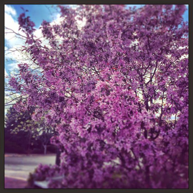 In Minnesota Foraging 101 How To Hunt For Morel Mushrooms Morel Mushroom Morels Blossom Trees
