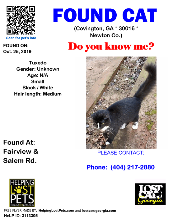 Found Cat Covington GA Oct.25 2019 Closest
