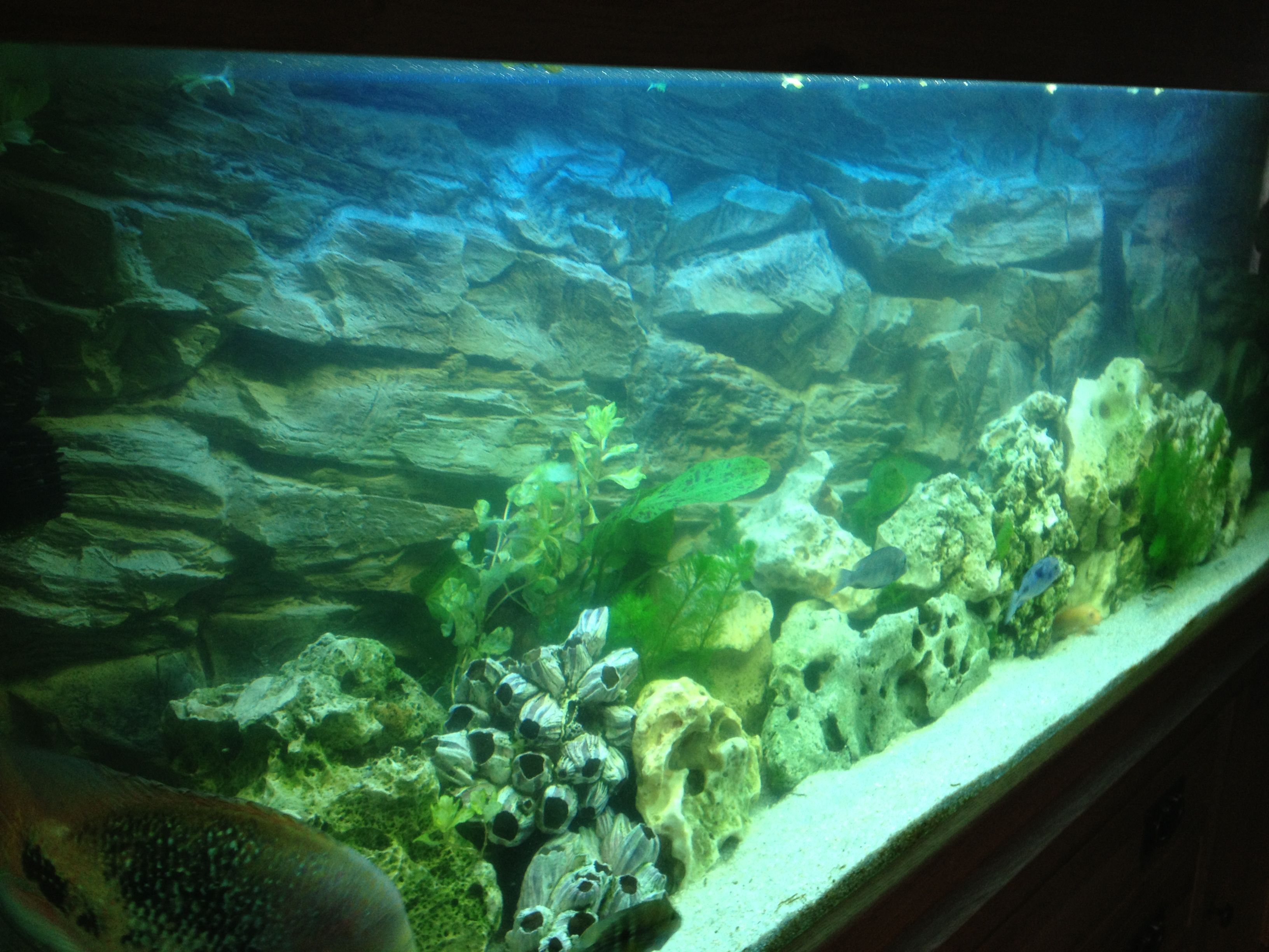 Fish tank in york - Large Fish Tank Side View Of 3d Rock Background