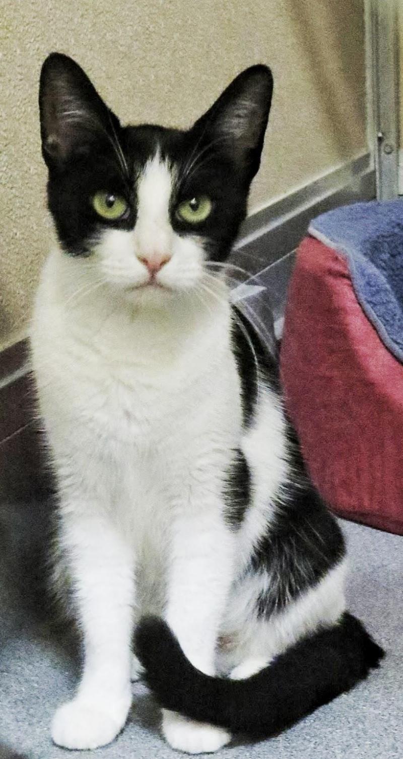 "Adopt 5297 ""Dove"" on Pet adoption, Adoption, West babylon"