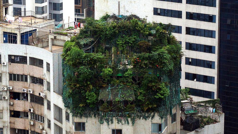 Laut lokaler Medien ist der Eigentümer dieser vor zehn Jahren gebauten, mit Grünpflanzen bedeckten vermutlich illegalen Konstruktion auf einem 19-stöckigen Gebäude in der chinesischen Stadt  Guangzhou nicht auffindbar.
