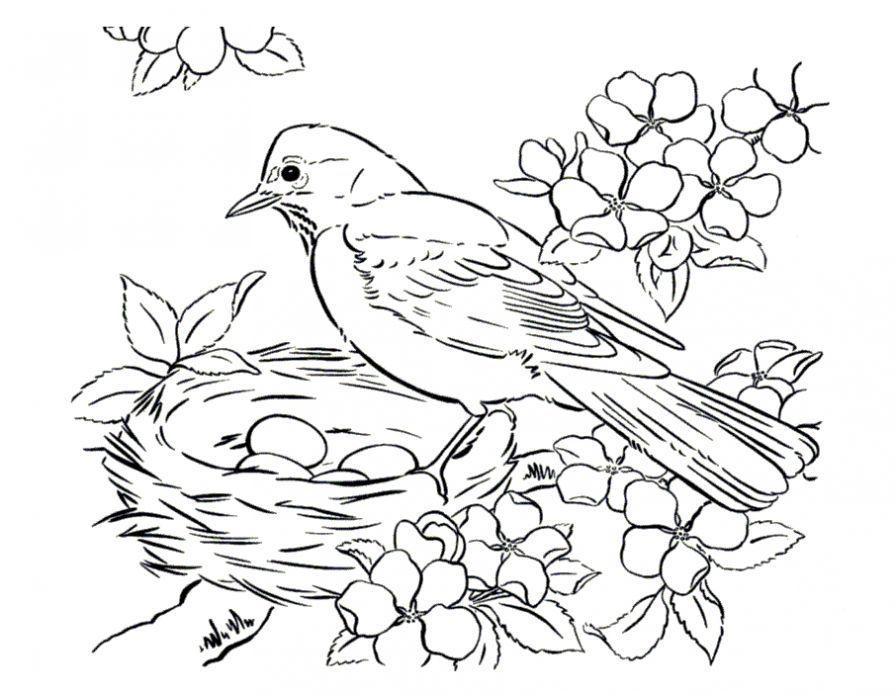 Раскраска птица гнездо - Сайт для мам малышей (с ...