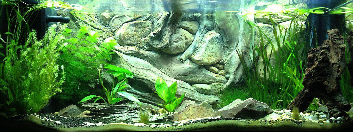 Amazon background in a medium size fish tank the best for Amazon aquarium fish