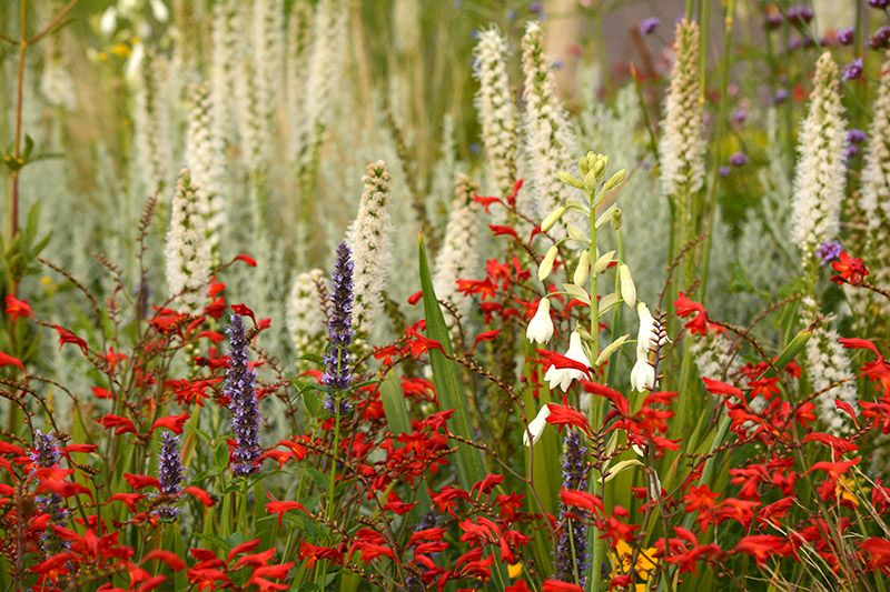 Kiesgarten gravel garden flowers pinterest garten - Kiesgarten bepflanzung ...