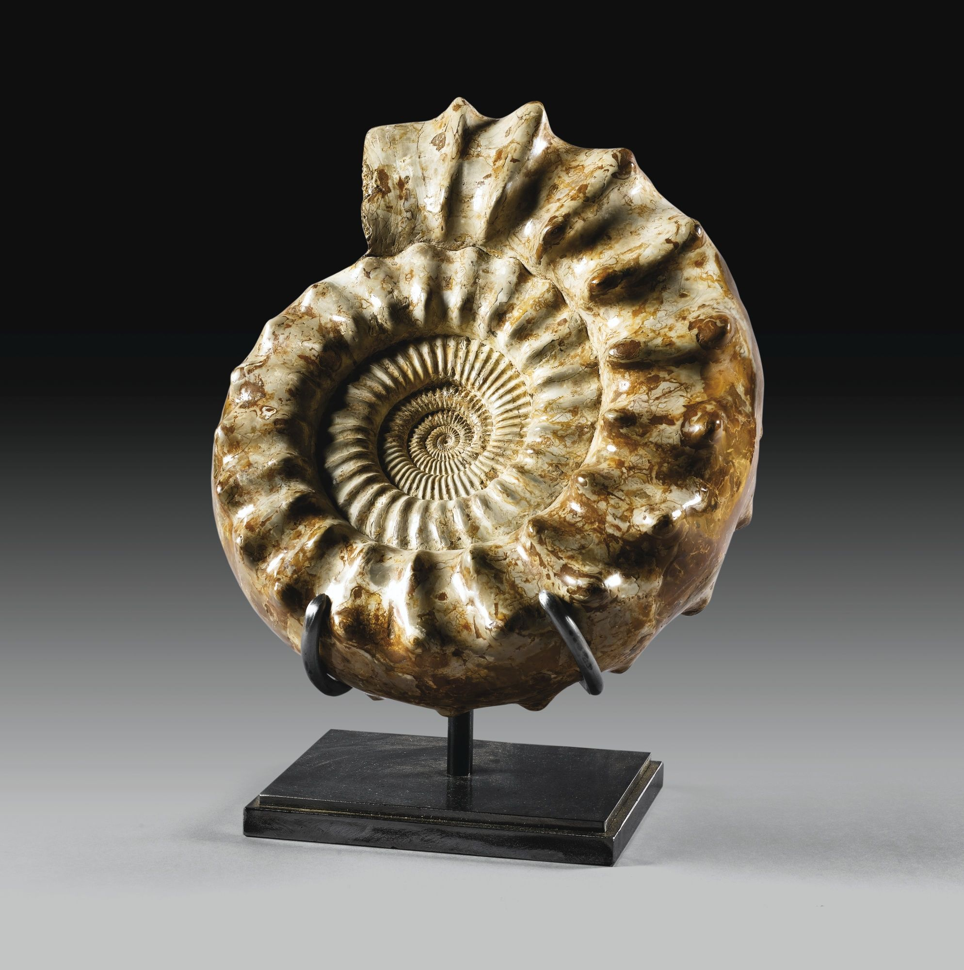 A NICE KRANOSPHINCTES RABEI  AMMONITE (COLLIGNON 1959), OXONIAN, UPPER JURASSIC, TULÉAR, MADAGASCAR Estimate  5,000 — 6,000  EUR  LOT SOLD. 8,125 EUR (Hammer Price with Buyer's Premium)