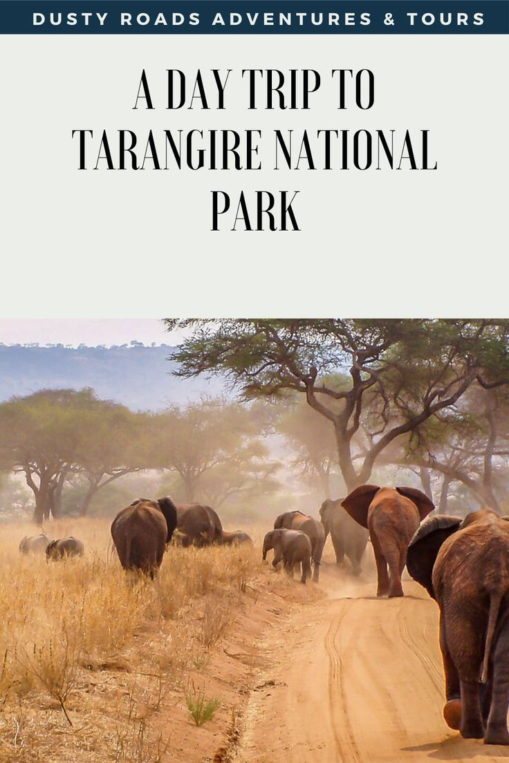 A day trip to Tarangire will give you time to witness the some of the big five