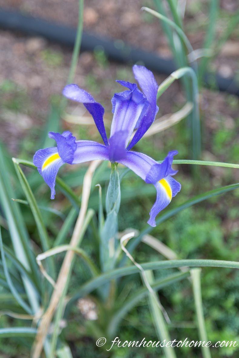 15 Low Maintenance Plants With Beautiful Blue Flowers Beautiful