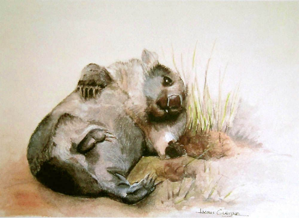 Wildlife Art. This is the Cheeky Wombat I met at Bonorong Wildlife Park. He was happy to pose and play for me while I painted him.