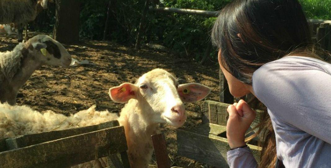 OSTRICH ZOO PARK, GOAT MILKING & CHEESE MAKING TOUR(2 HOURS) http://cretelimotours.com/tours/knossos-palace-agarathos-monastery-ostrich-zoo-park-goat-milking-cheese-making-tour/